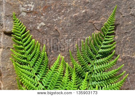 Two ferns lying on a red stone