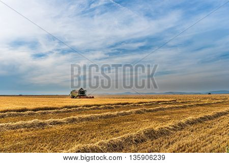 a picture of a wheat crop. Autumn color is impressive as always