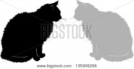 illustration with furry cats isolated on white background