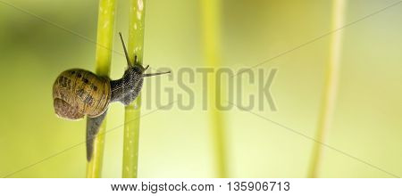 Nature website banner of a snail as crawling on green plant