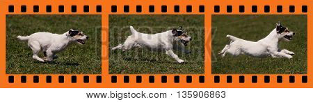 Website banner of a funny running dog - in a photo filmstrip