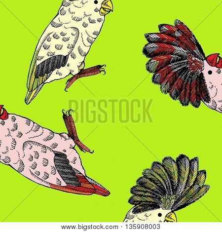 Parrot with pappus. Hand drawn vector stock illustration. Seamless background pattern.