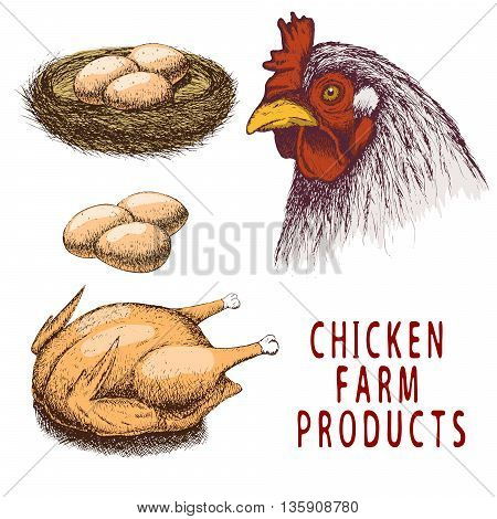 Set of color chicken farm products.Isolated on white background.Vector illustration