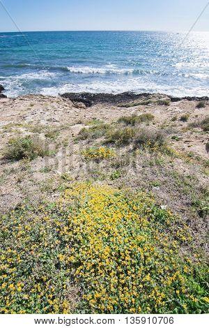Blossoming Spring Seaside Rocks