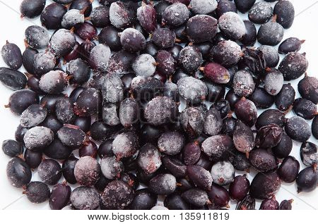 black currant berries in the frost on a white background