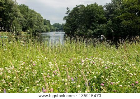A russian nature with lake, trees, grass, flowers.