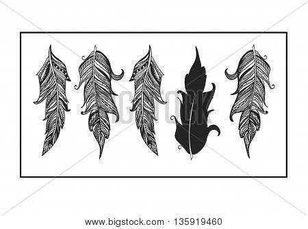 Beautiful feathers of the Phoenix Hand drawn.Element for your design. Vector