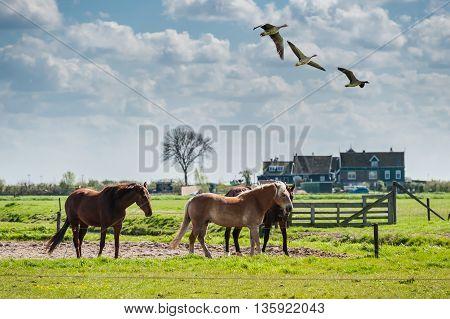 Beautiful Horses In Paddock