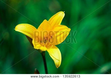 a yellow flower growing among green grass