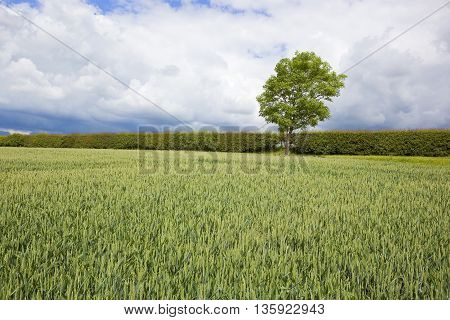 Storm Clouds Over Summer Farmland
