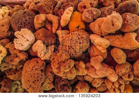 Natural orange, tan and brown sea sponges shot at closeup range ideal for backgrounds.