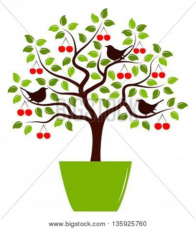 vector cherry tree with birds in pot isolated on white background