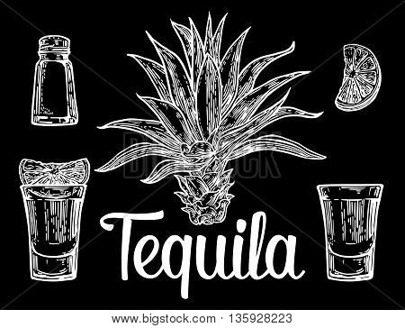 Glass botlle of tequila cactus salt lime. Hand drawn sketch set of alcoholic cocktails. Vector engraving illustration