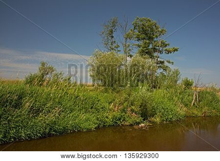 Overgrown with dense green bushes and grasses river bank Liwiec in Poland. Beautiful sunny summer day with blue sky. Horizontal view.