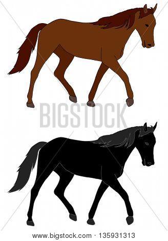 horse illustration - vector