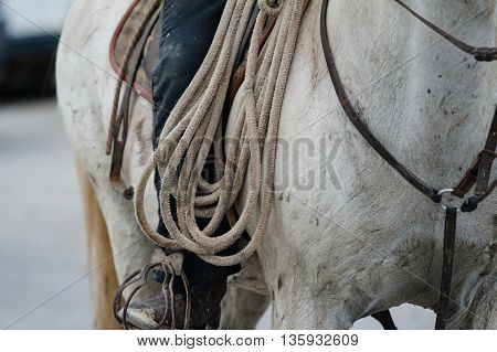 rider on his horse holding lasso closeup