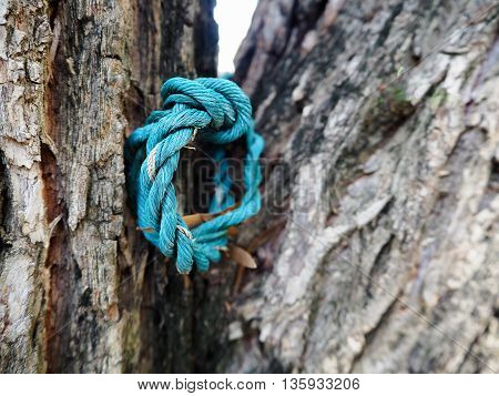blue tough rope on the trunk of tree