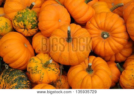 horizontal picture of a pumpkins in a garden