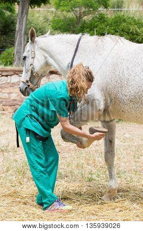 Female Veterinarian performing a hoof check on a young mare