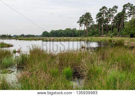 Landscape with lake swamp in Kampina, Netherlands