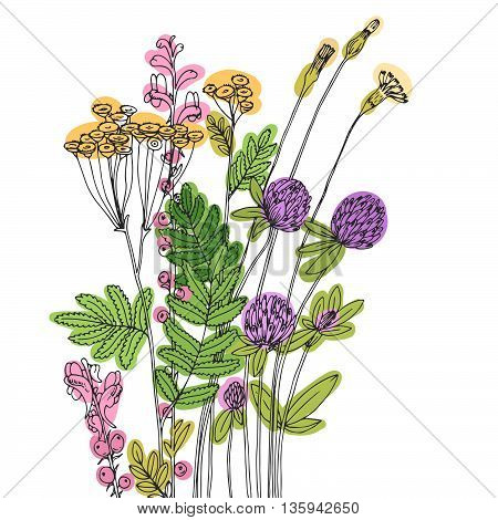 Vector sketch of the wildflowers on a white background.