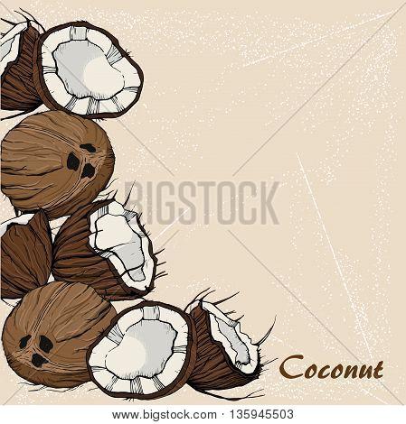 Coconut sketch in retro stile on vintage background. For design