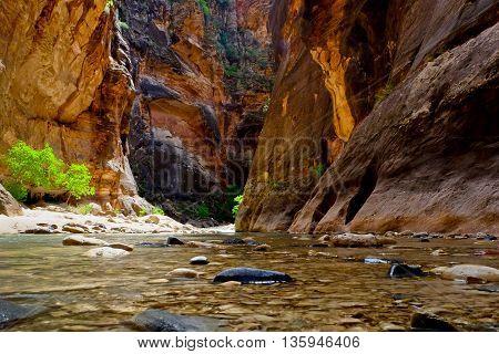 The Narrows of the Virgin River Slot Canyon.  Zion National Park, Utah, USA