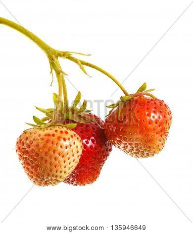 Bunch Of Strawberries On The Germ. On A White Background
