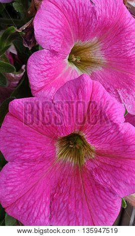 Beautiful blooming purple flowers in spring nature
