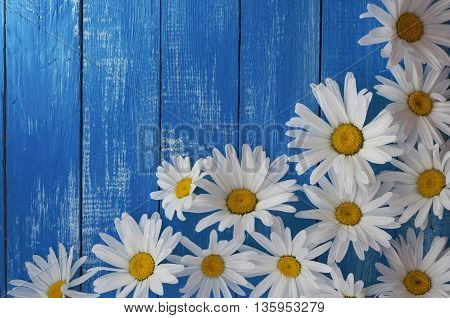 White chamomile flowers on wooden vintage blue background