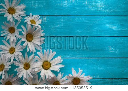 Wooden horizontal blue background with white daisies blank space