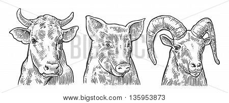 Farm animals icon set. Pig cow and goat heads isolated on white background. Vector black vintage engraving illustration for menu web and label. Hand drawn in a graphic style.