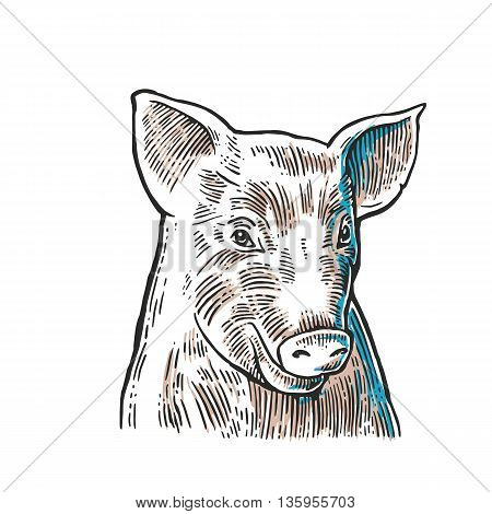 Pig head isolated on white background. Vector black vintage engraving illustration for menu web and label. Hand drawn in a graphic style.
