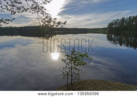 The evening sun is reflected in a small lake in the woods. South Karelia Russia.June.