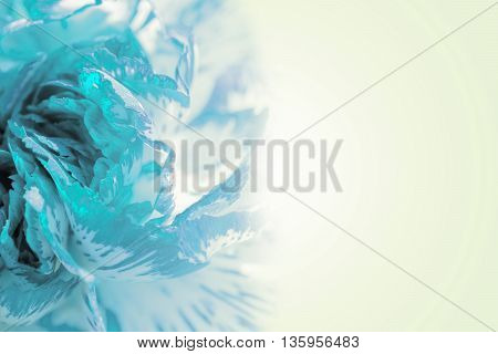 Sweet Color Petal Exotic Cyan Rose On Romantic Gradient Background