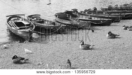 Black and white image of wooden rowing boats