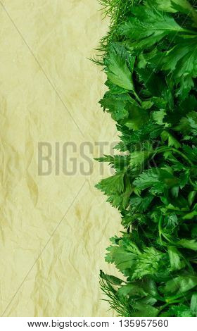 fennel, parsley lie on a tray on light brown paper, fresh, green leaves,