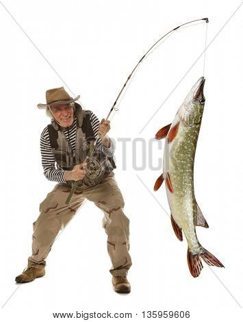 Senior fisherman with big fish - Pike (Esox Lucius) isolated on white