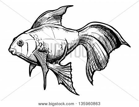 Vector hand drawn illustration of Gold fish
