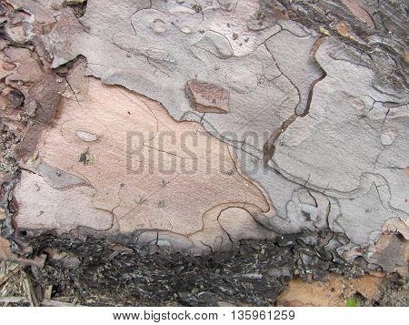 a piece of pine-tree bark - macro photo