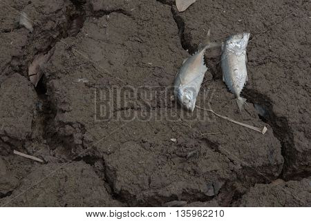 Dead fish, dry land, World Disaster, Cracked ground background