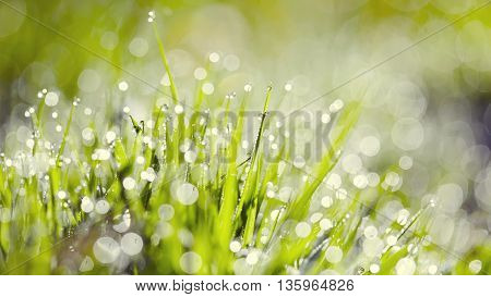 Abstract background from a wet grass in dew drops