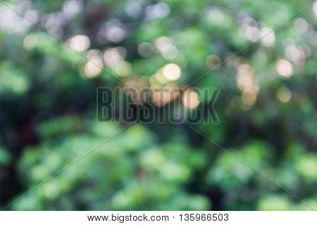Tree Bush Bokeh And Sunlight