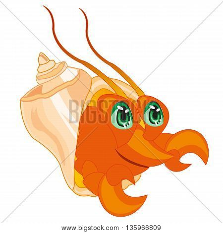 The Sea mammal crab peers out seashell.Vector illustration