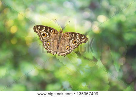 Buterfly On Dreamy Bokeh
