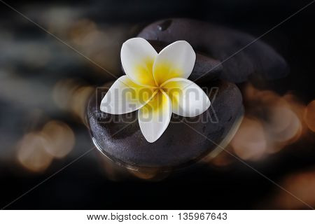 Flower Plumeria Or Frangipani On Pebble And Water In Gold Bokeh