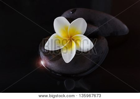 Flower Plumeria Or Frangipani On Pebble And Water In The Dark