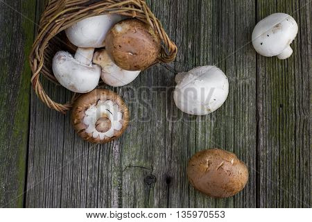 Top View on a Brown and White Champignon Mushrooms in Wicker Basket on Old Wooden Table
