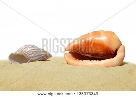 Tropical sea shells on the sand isolated on white background