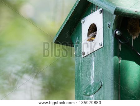 Young Sparrow Sitting In A Birdhouse